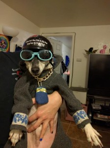 Judge The Cycling Wonder Pup